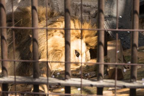 写真撮りたくて春の『野毛山動物園』で動物撮ってきた